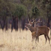 _0002_0002_privatizar-montes-coto-de-caza